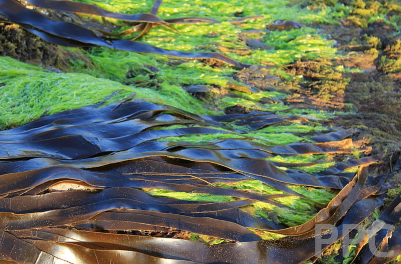 Algae ink - the world's most eco-friendly ink
